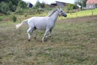 Frankreich_20100918_142622
